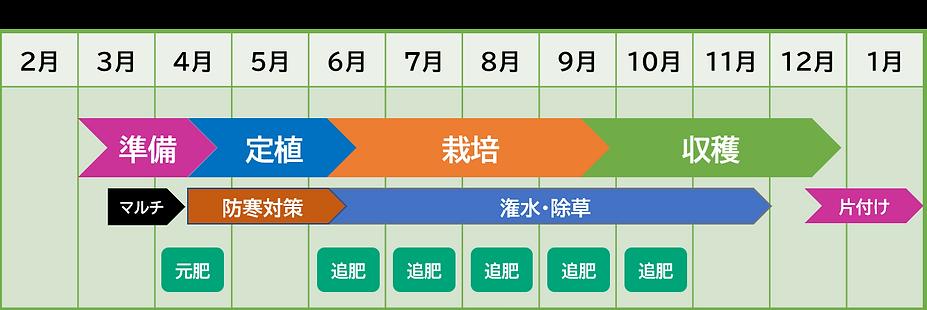 青パパイヤ 栽培カレンダー 家庭菜園