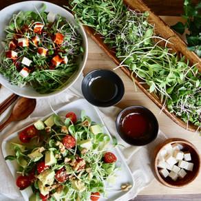 새싹 비빔밥, 🌱 새싹 샐러드 그리고 새싹 키우기 | Korean sprouts Bibimbap and salad