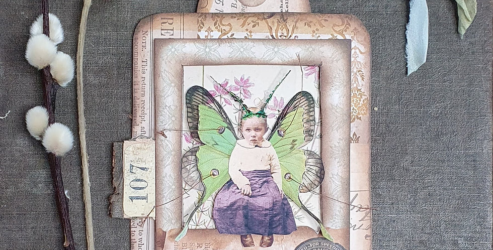 Fairy Specimen Assemblage