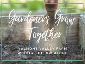 Gardeners Grow Together                          Week 24, June, 2021: Biennials