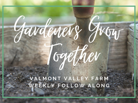 Gardeners Grow Together~Week 29       July, 2021: They're Back! Controlling Japanese Beetles
