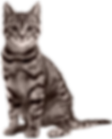 Cat-Sweet-PNG-File.png