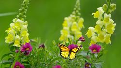 NY_Spring_Blossoms_Bumper_FY17_4x4_LR_0174