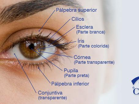 Conheça as partes externas dos olhos e suas funções