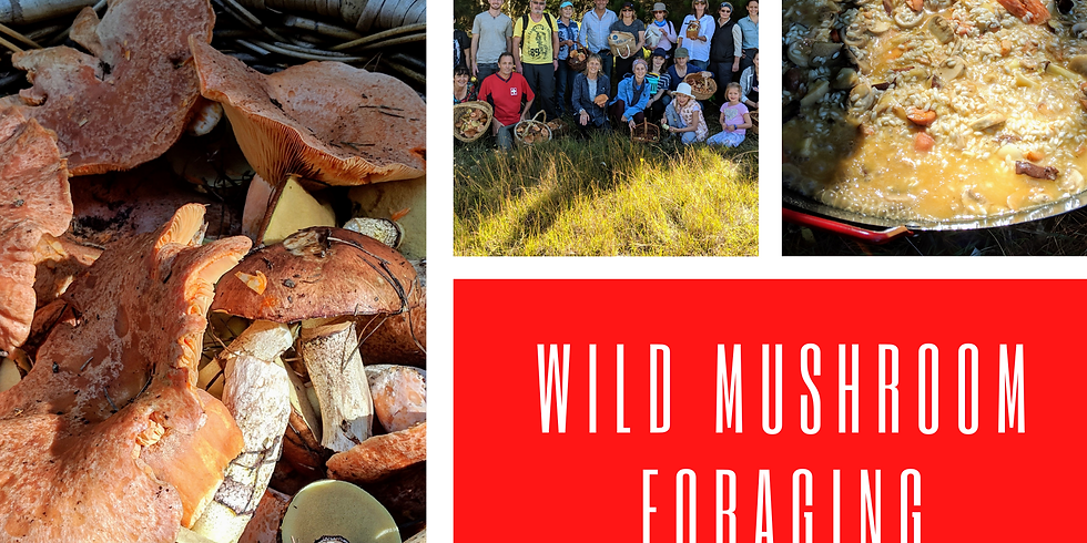 // BOOKED OUT // Wild Mushroom Foraging in the Blue Mountains
