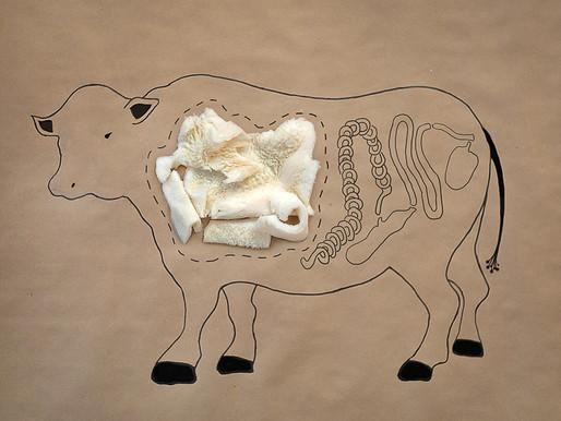 Culi-Temp Corner: Tripe, the Forgotten Meat