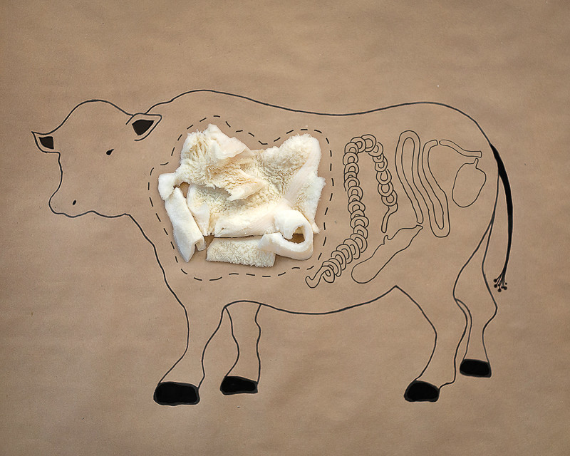 Figure 1. Diagram of bovine tripe.