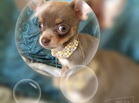 Luxury dog jewellery