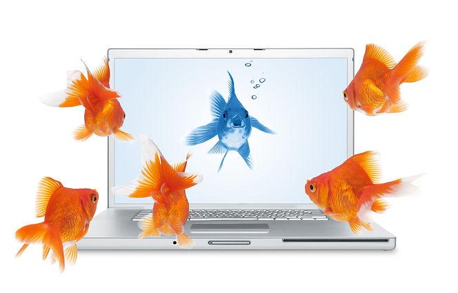 Blue fish PC.jpeg