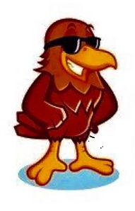 cool hawk.jpg