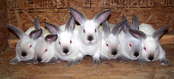 exotic vet cardiff, rabbit vet cardiff south wales, rabbit vet cardiff, guineapig vet cardiff, rabbit vet bridgend, exotic vet south wales, exotic vet cardiff, rabbit vet cardiff, rabbit vet cardiff, rabbit vet south wales, rabbit vet south wales, rabbit vet, rabbt friendly vet, rabbit specialist vet, rabbit savy vet, guinea pig vet, vet for rabbits, vet for guinea pig