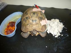 Tortoise Vet Cardiff
