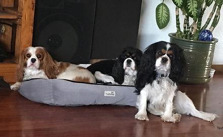 dogs (7)_edited.jpg