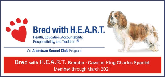 AKC bred with heart banner.jpg