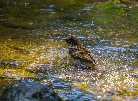 Biodiversity Week: How To Make Bird Baths