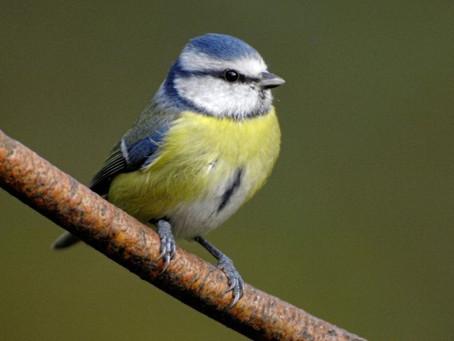 Biodiversity Week: How To Make A Bird Feeder