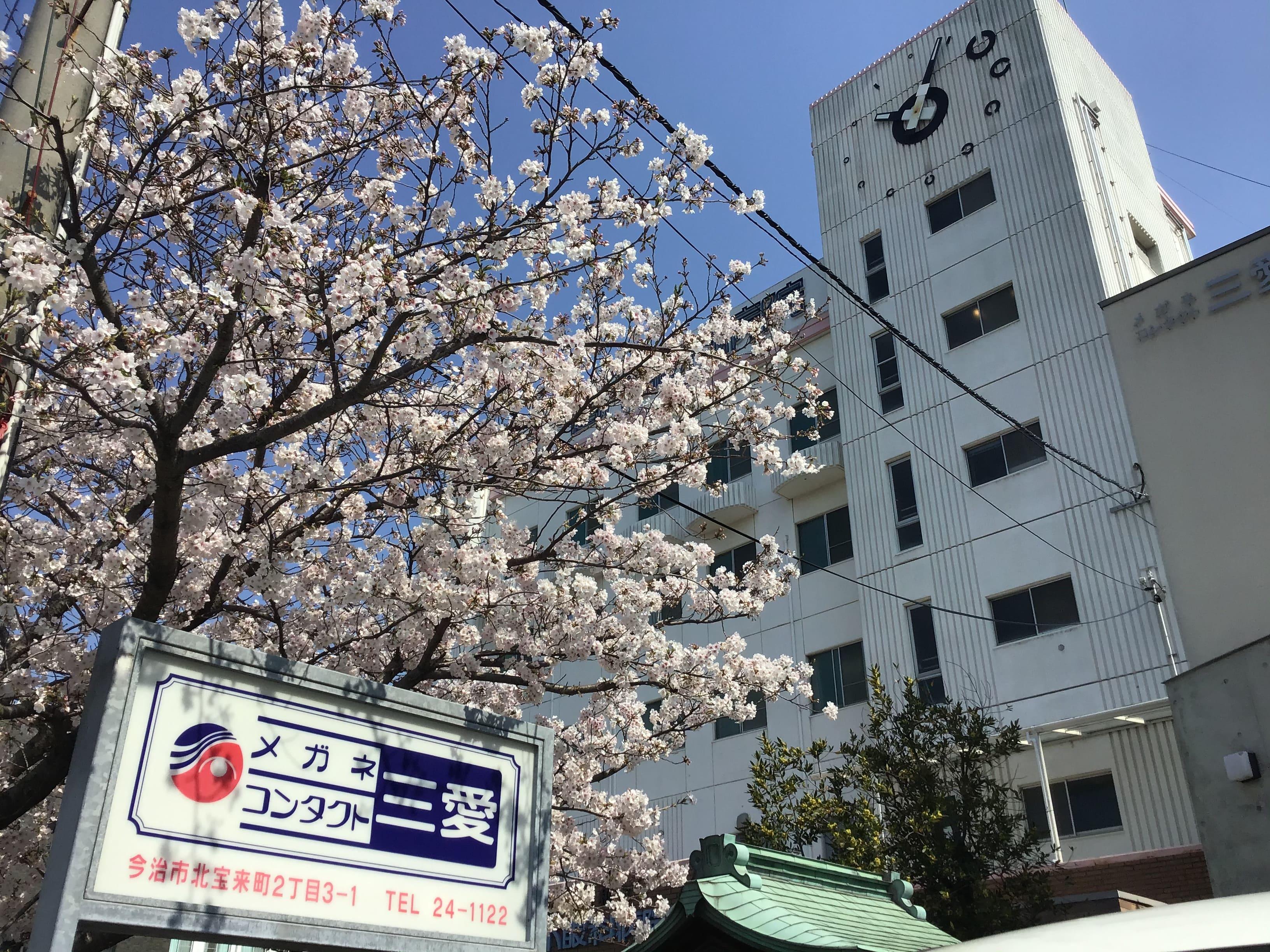 2020桜の木