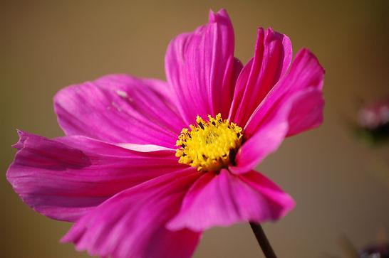 Photo fleur de printemps - photo nature