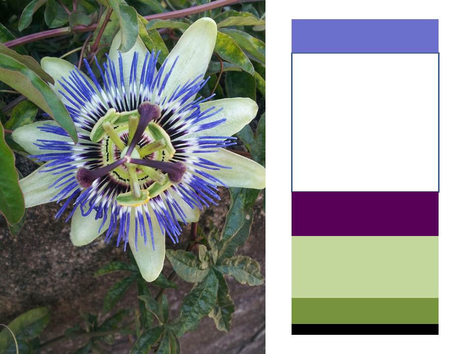 花の色彩分析①-1.jpg