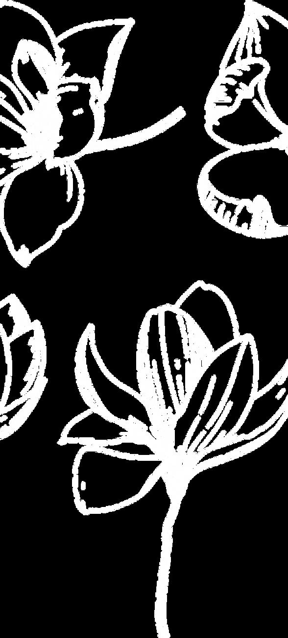 Magnolia_white.png
