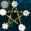 Thumbnail: Pentagram - Green with White Flowers - Small