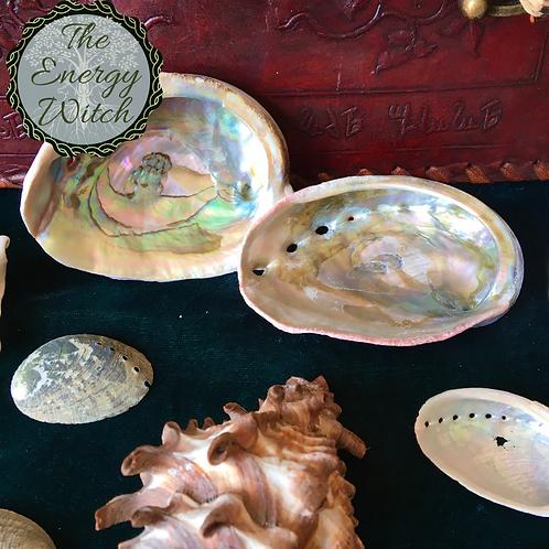Abalone Shell - 7.5cm (3 Inch)