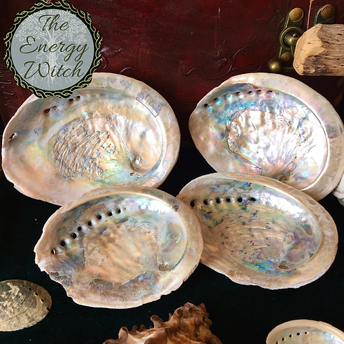 Abalone Shell - 10cm (4 Inch)