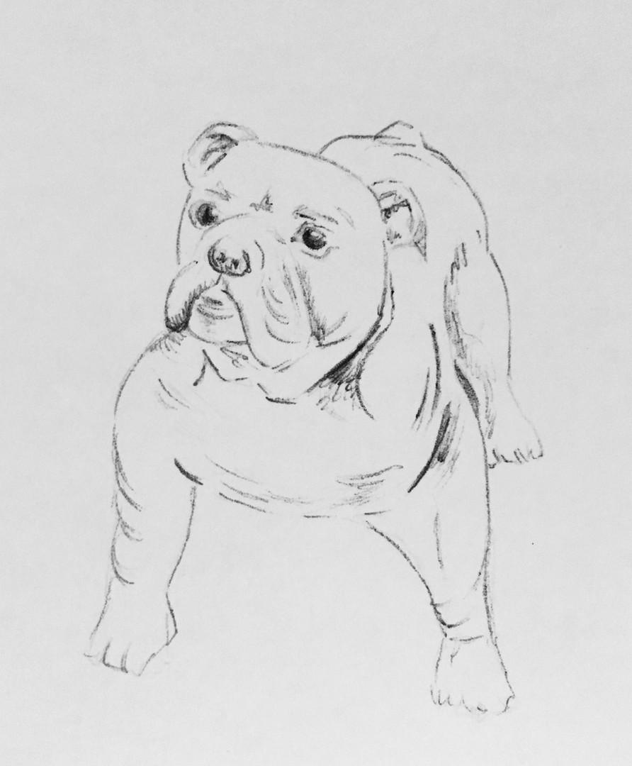 Pet illustration