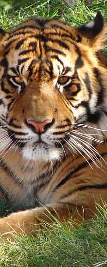 Tiger Safari,Ranthambore