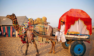 Pushkar Camel Ride.jpg