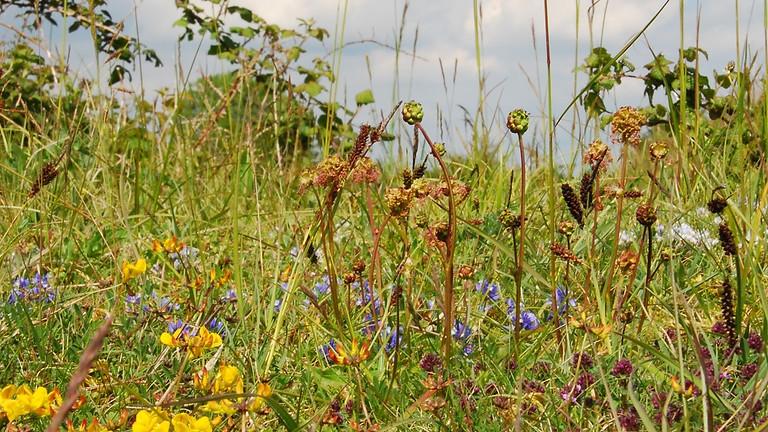 Wild Abundance in a Time of Decline