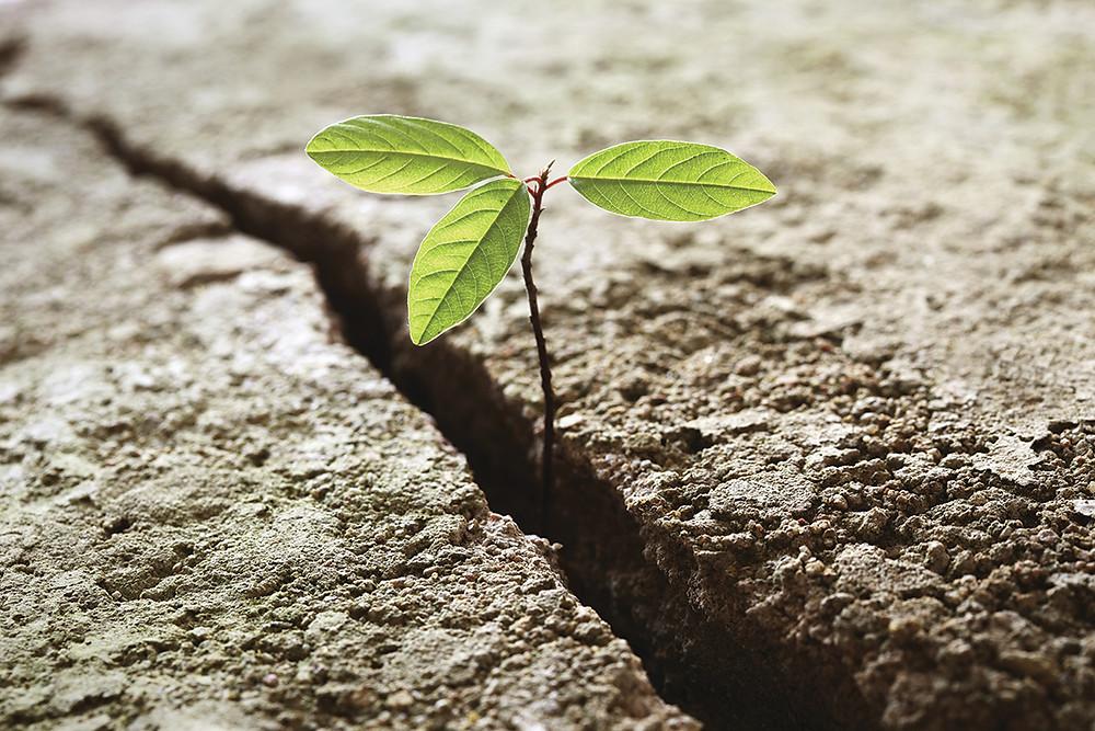 Groei en uitdagingen
