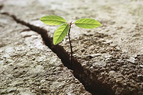 veerkracht-getrealtraining