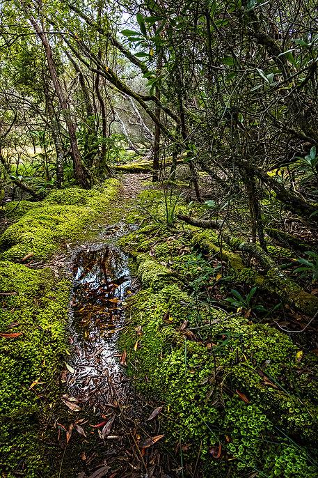 forest path.sml..jpg