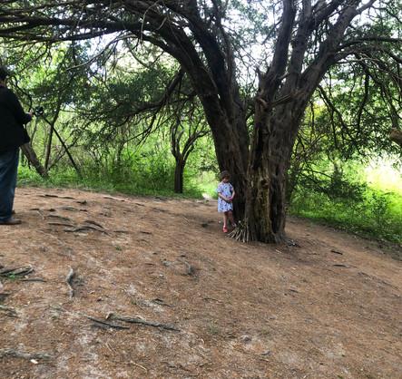 Faerie Tree Shoot.jpg