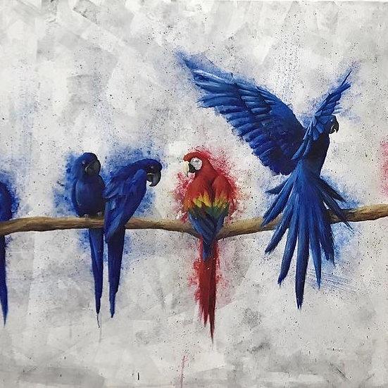 Parrots By M.Koan