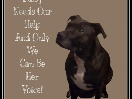 Being a Voice for the Voiceless