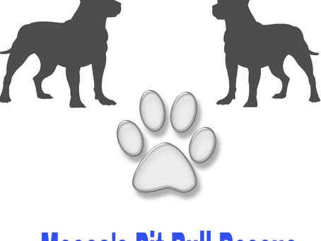 """Reward Based Training with Your """"Pit Bull"""" Terrier Type Dog"""