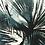 Thumbnail: Super nova