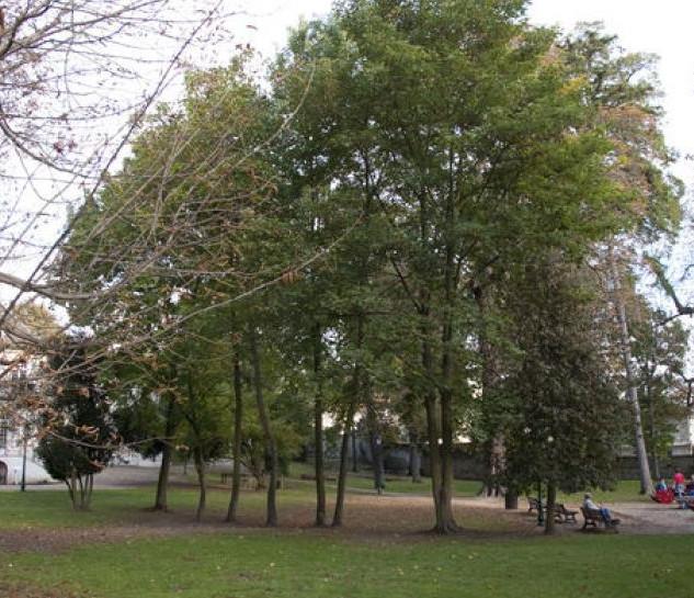 Parc_du_Père_Joseph.jpg