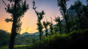 A Beautiful Homestay Hidden in the Nilgiri Mountains, a Perfect Road-trip Post Lockdown