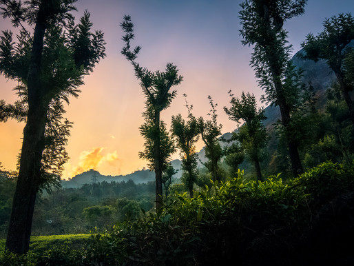 A Beautiful Homestay Hidden in the Nilgiri Mountains, a Perfect Road-trip Post Lockdown