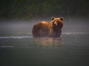 Russia_Kamchatka_Bear-2_WV.jpg