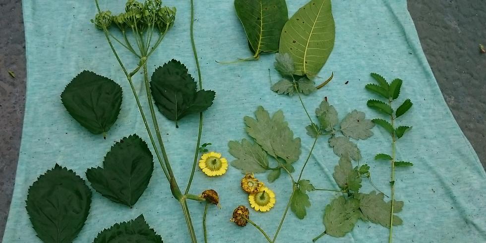 Pflanzenfärbereien und Wildkräuterküche