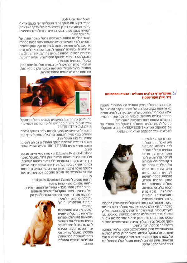 משקל עודף אצל כלבים וחתולים