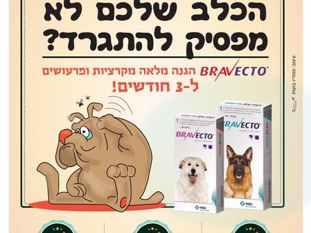 חדש - Bravecto - הטיפול האולטימטיבי לפרעושים וקרציות!