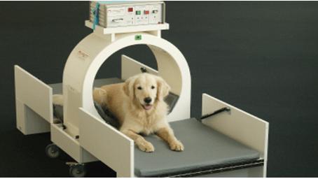 פתרון ארוך טווח להפרעות תנועה בכלבים - Pulse Signal Therapy  - PST  -(טיפול באותות אלקטרומגנטים)