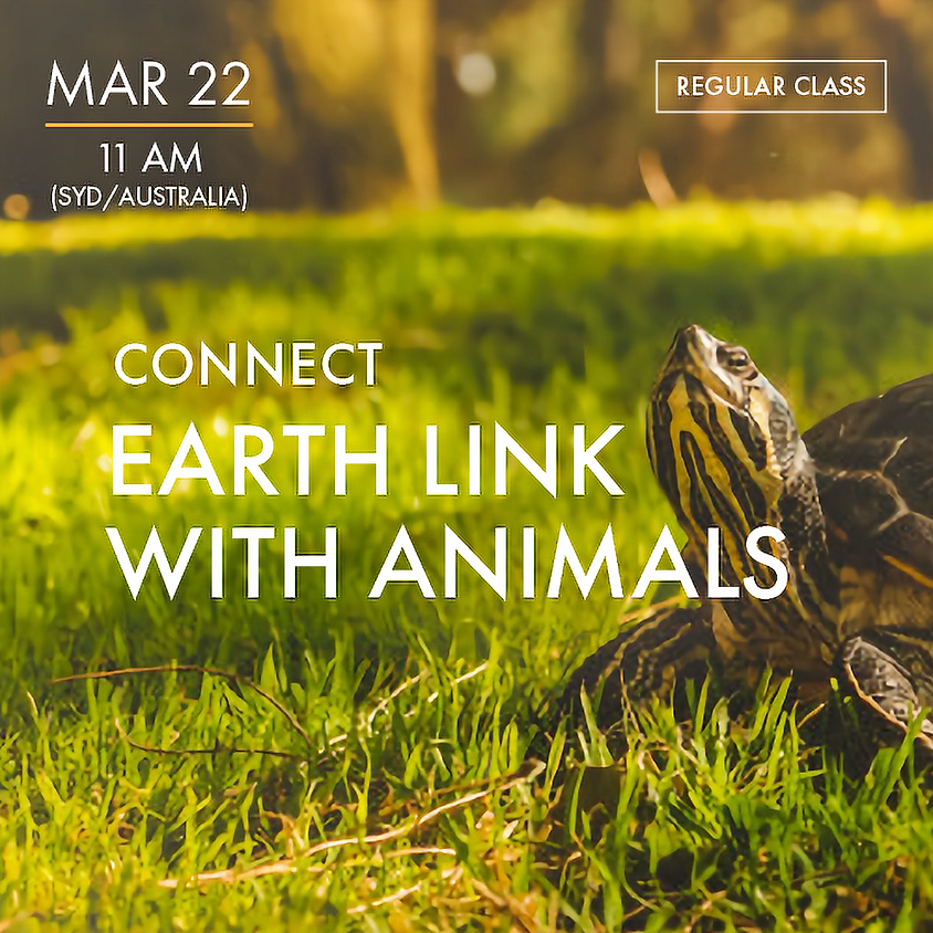 CONNECT - Earth Link with Animal
