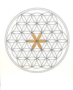 Golden Flower of Life (line)