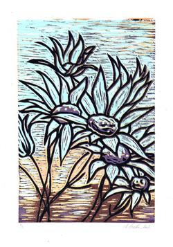 Flannel Flower (2002)  Nick.jpg